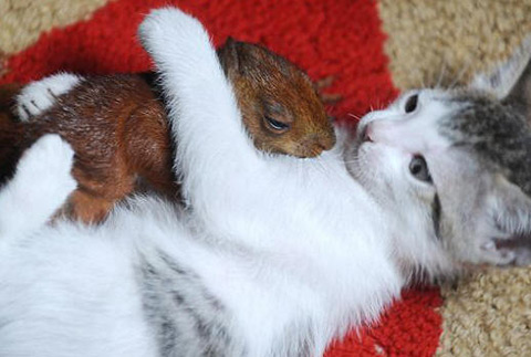 Squirrel & Cat